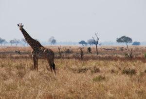 viajar por africa tanzania