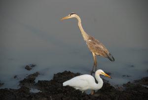 birds mikumi
