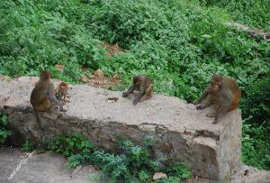 monos-india
