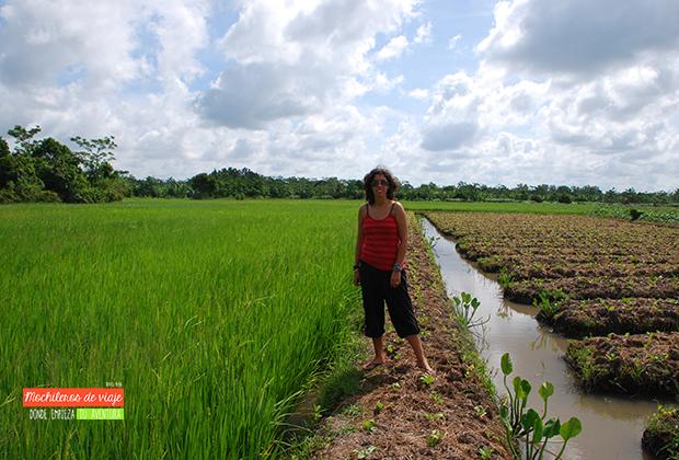campos-arroz-vietnam