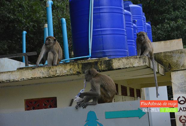 monkey-toilet