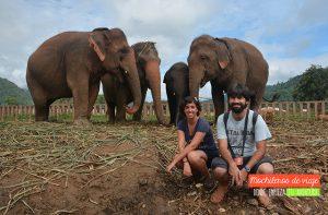 desayuno elefantes
