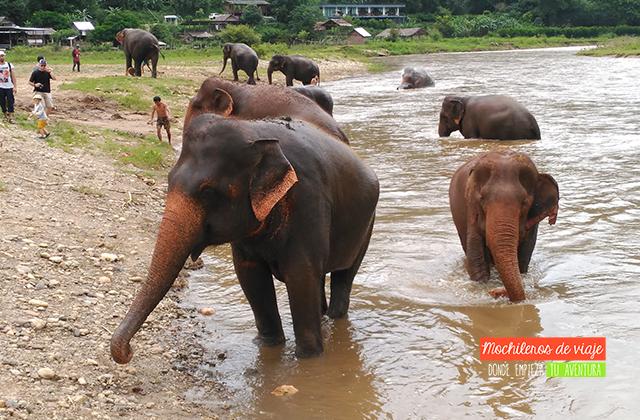 elefantes agua