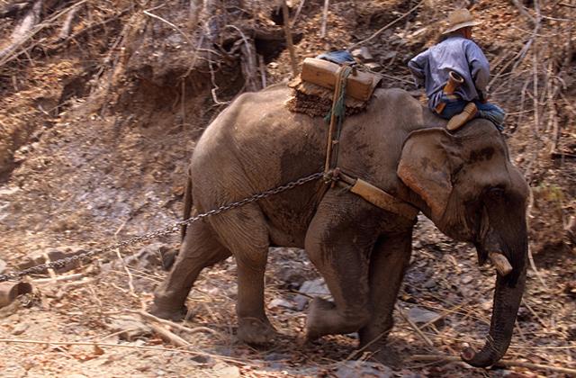elefantes madereras