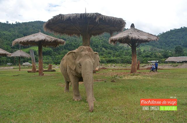 instalaciones santuario elefantes