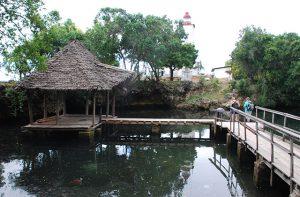 acuario de tortugas
