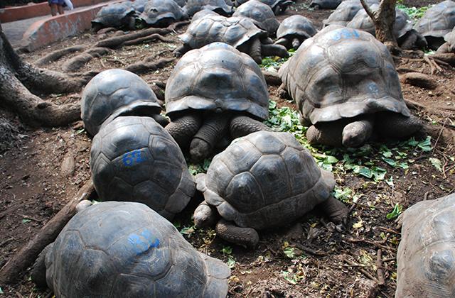 tortugas de isla prisión