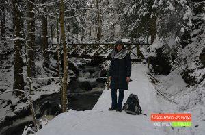 selva negra nevada