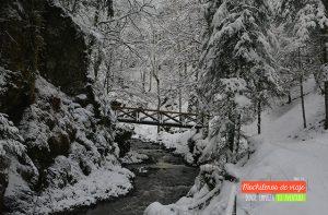 selva negra nieve