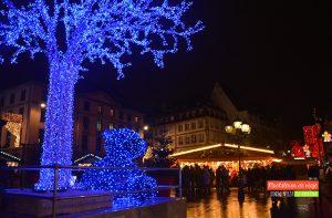 arbol azul estrasburgo