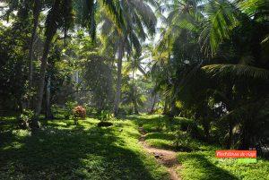 selva corcovado costa rica