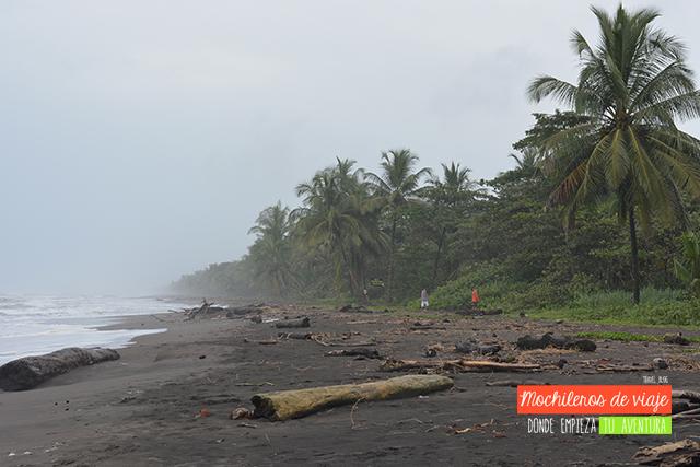 playa tortuguero parques nacionales de costa rica