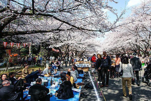 cerezos parque ueno tokio