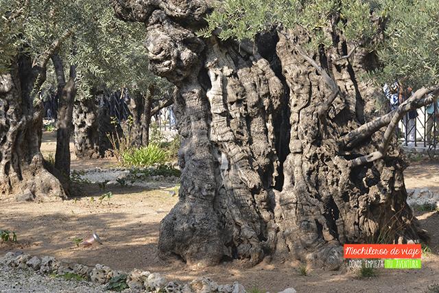 jardín de getsemani