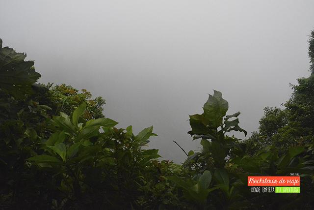 mirador bosque nuboso