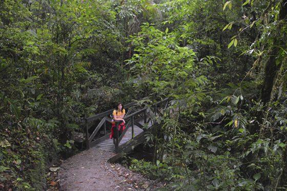 un dia en monteverde y bosque nuboso