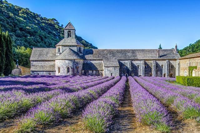 abadía de senanque vaucluse