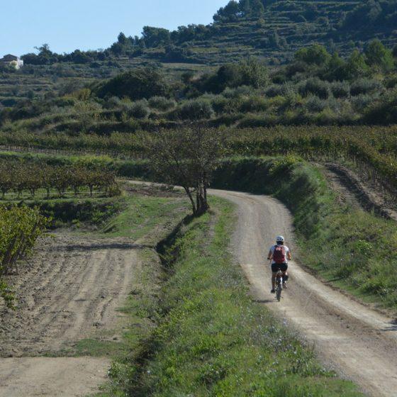 ruta en bici por el penedès