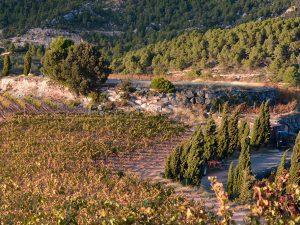 rutas de vino por catalunya