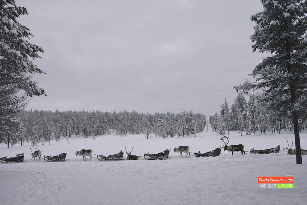 excursion renos salla